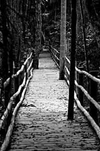 Quem consegue fazer bem suas escolhas mesmo obrigado a seguir um caminho pode se considerar independente