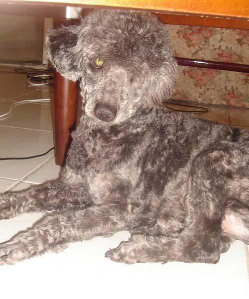 Roque, cãozinho desaparecido!!!