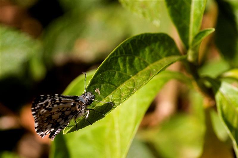 Como diz o efeito borboleta, toda ação pode causar alterações bem distantes do seu local de origem